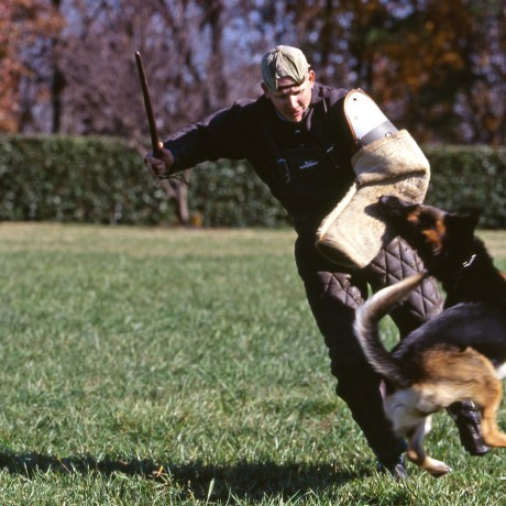 Trained German Shepherds: Champions & Training Process