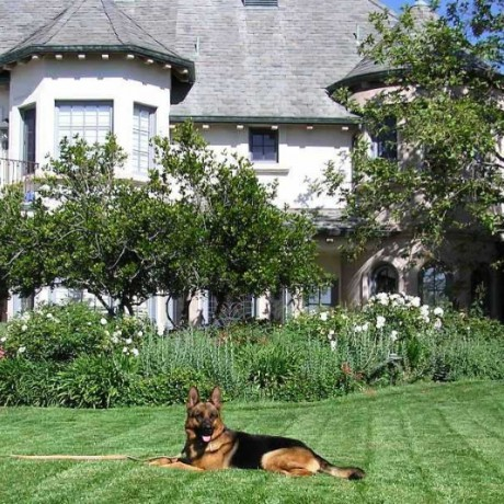 Trained German Shepherds Provide 24/7 Security